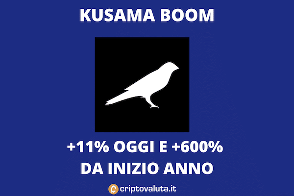 Kusama Cresce: +600% in un anno
