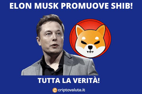 Elon Musk e Shiba Token - l'analisi di Criptovaluta.it